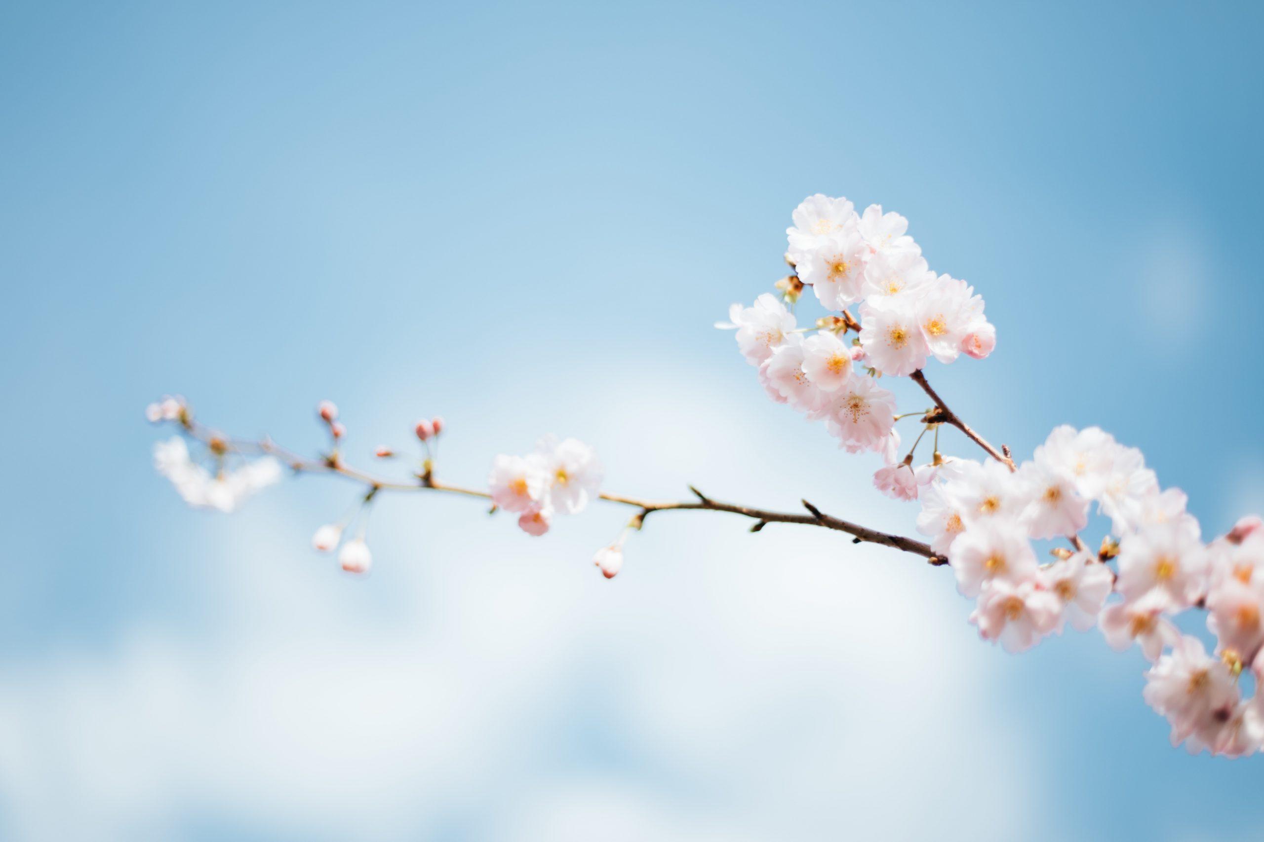 《水晶玉子の占い》|春到来!この春、あなたがする2つの特別体験(恋愛・人生)+1年後のあなた