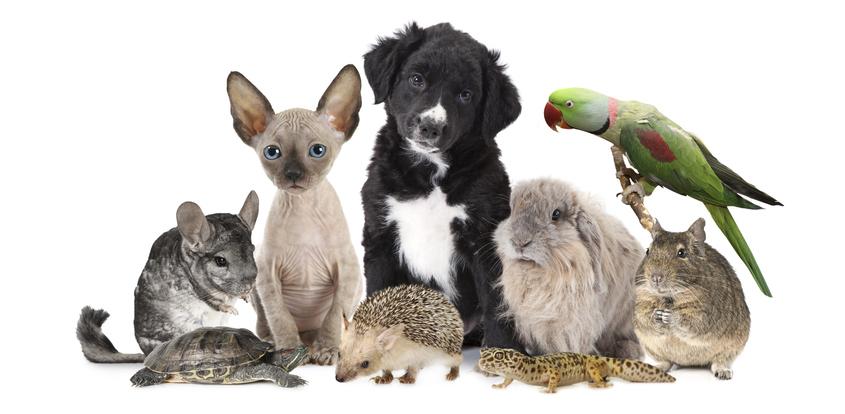 夢占い 夢に犬や猫が出てきた!「動物」が出てくる夢が示すもの