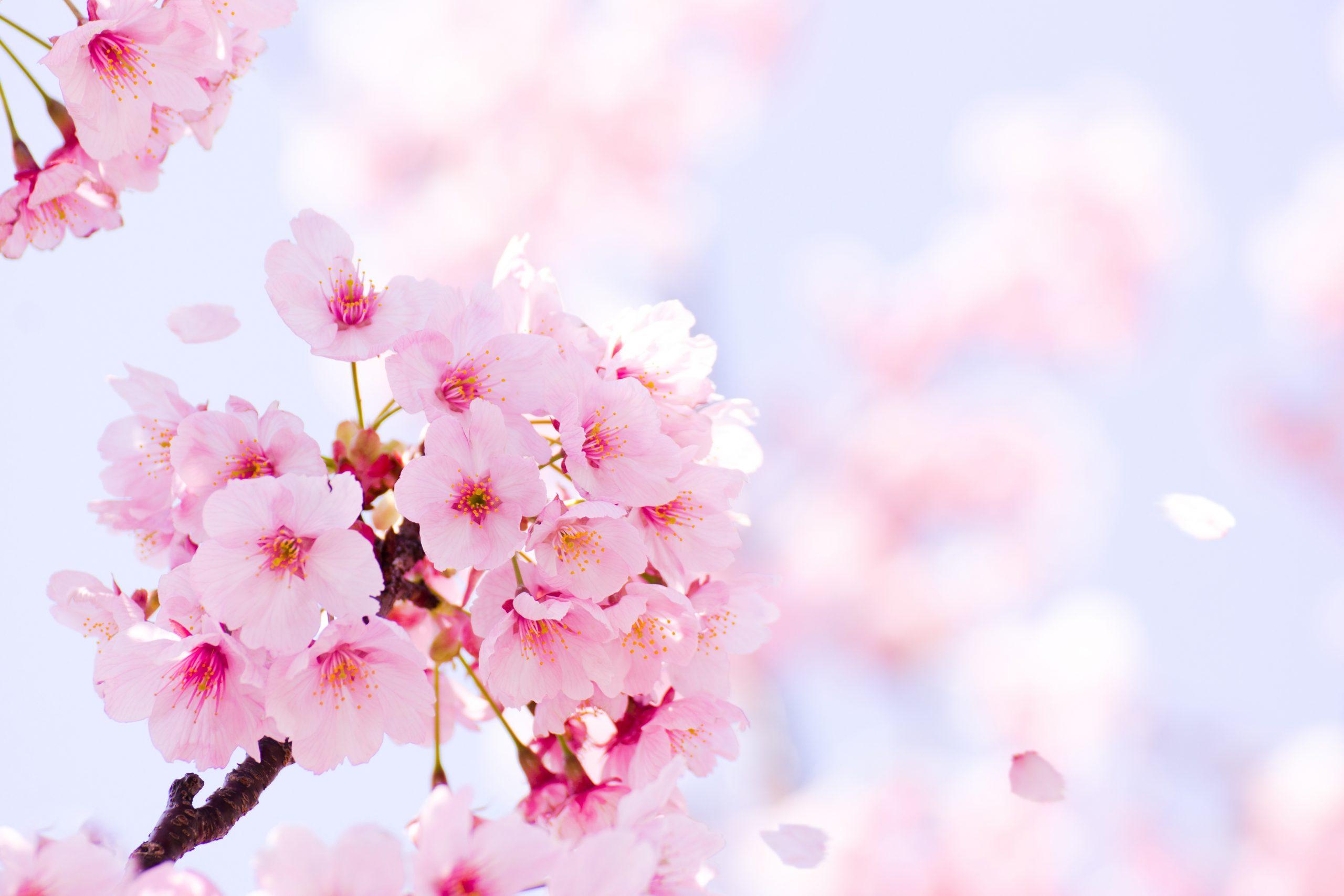 ◆4月5月6月版◆|《松田広子の人生霊視》この春、どんな運命が待ち受けているのか占います!
